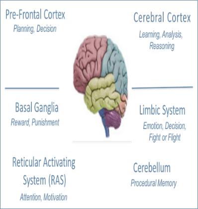 ras-brain   Crystal Lean Solutions